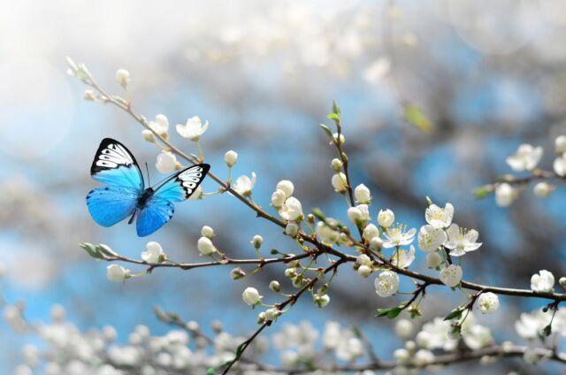 mariposas-slide_0
